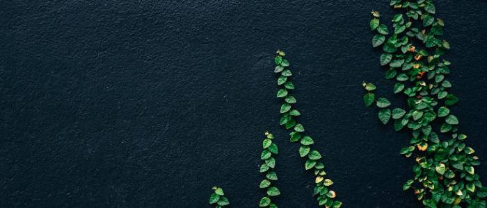 Plantes pour montrer l'action de verdir son hébergement