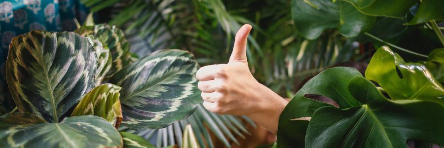 Pouce en l'air pour signifier les bienfaits d'un site web écologique